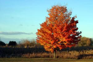 fall-tree-2005-aWIM72.jpg